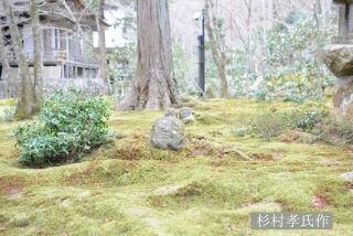 人気観光スポット「三千院」の見どころ|美しく苔むした庭園イメージ>