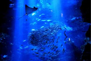 京都駅前「京都水族館」の見どころ|国内最大の内陸型水族館イメージ>