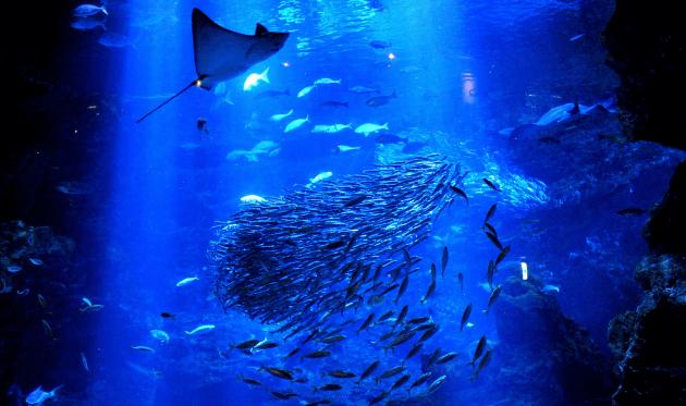 京都水族館の京の大水槽