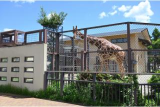 「京都市動物園」の観光・見どころ|人気者の集まる動物園イメージ>