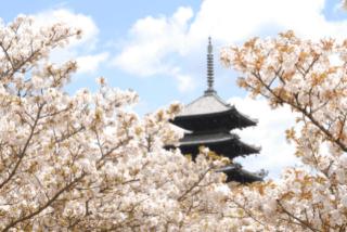 「仁和寺」の観光・見どころ|御室桜で名高い世界遺産の古刹イメージ>